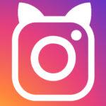 Instagram Gatti di Roma Torre Argentina