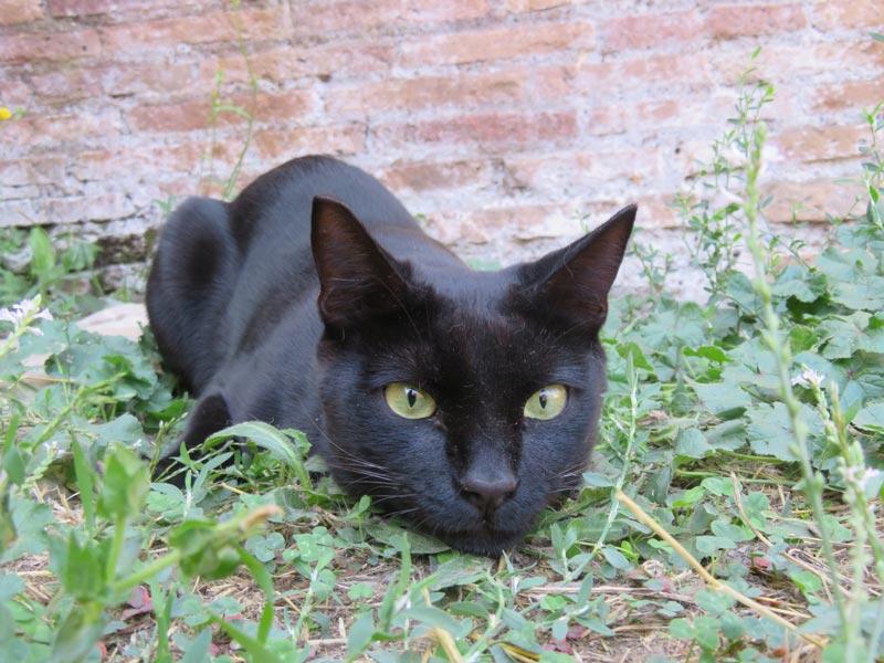 Ceccobello I gatti della colonia felina Largo di Torre Argentina